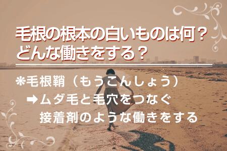 4.毛根の根本の白いものは何?